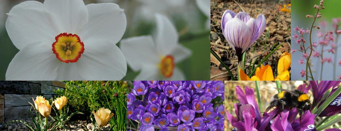 Collage aus verschiedenen Frühjahrsblühern wie Krokusse und Narzissen