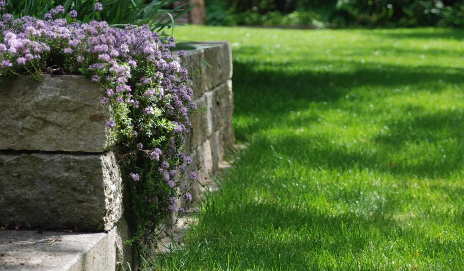 Trockenmaueranlage mit hängendem violett blühendem Kaskadenthymian