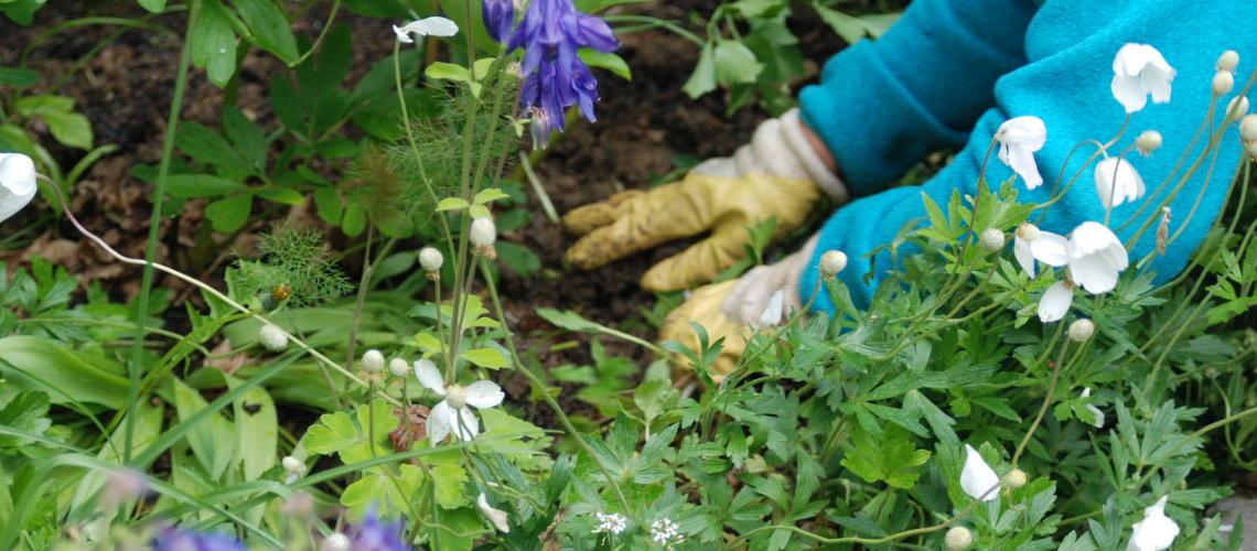 Gartenarbeiten im Blumenbeet