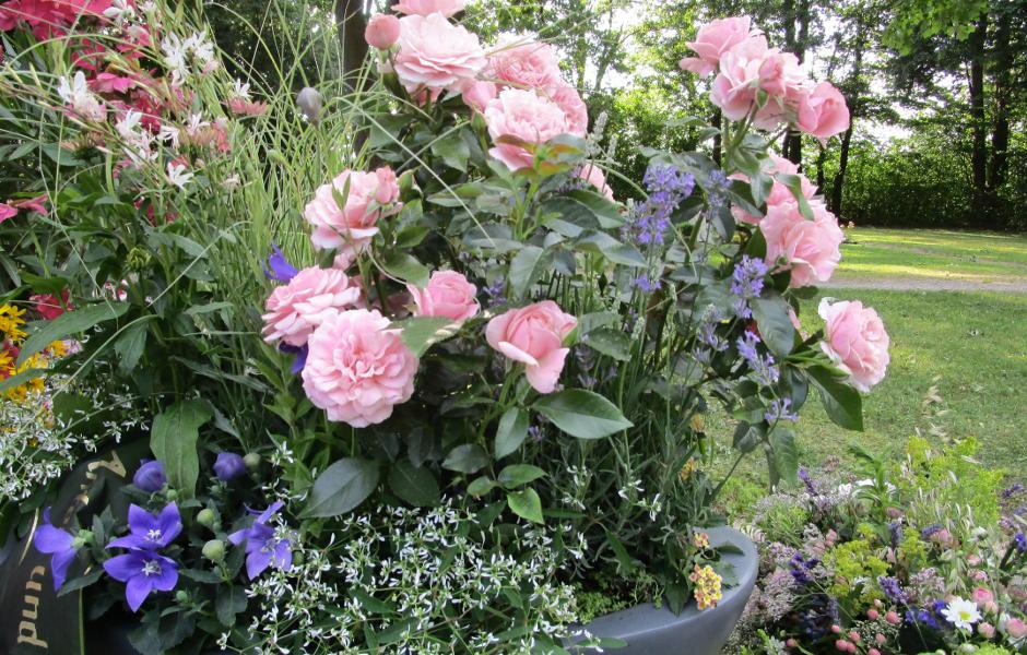 Bepflanzte Grabschale mit Rosen als Mittelpunkt