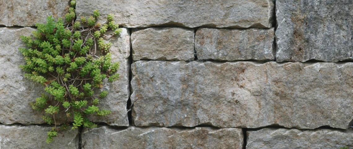 Detail einer Trockenmauer aus Ingolstadt