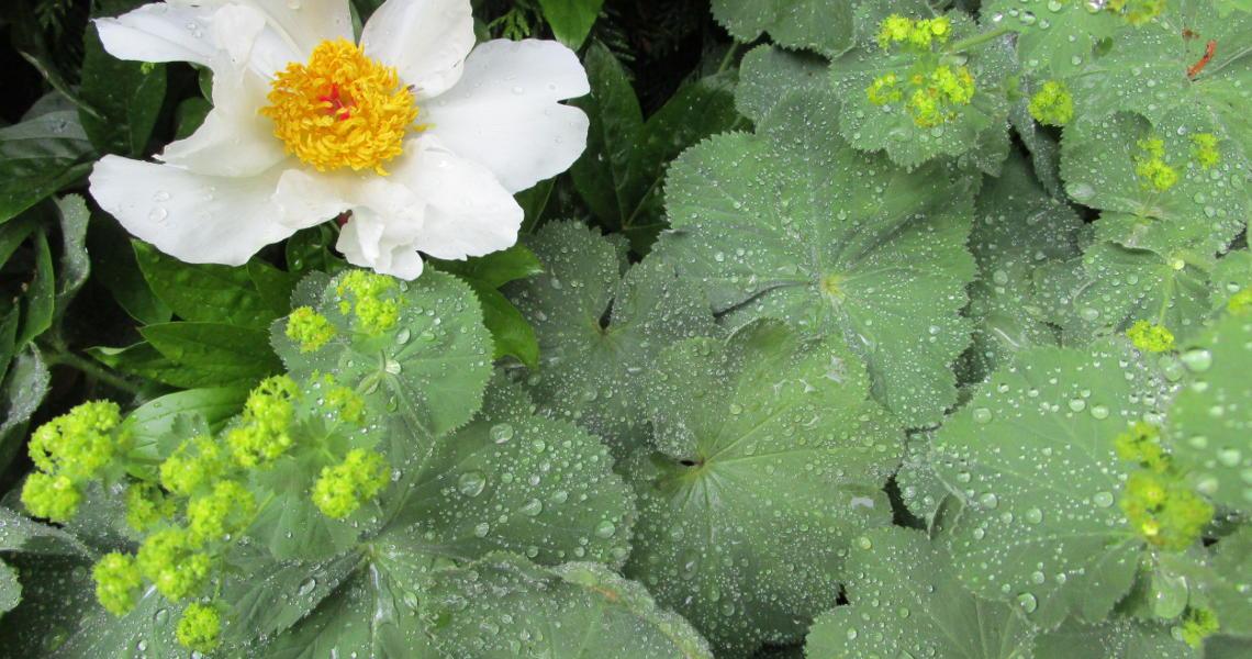Pflanzenkombinationen aus Ingolstadt