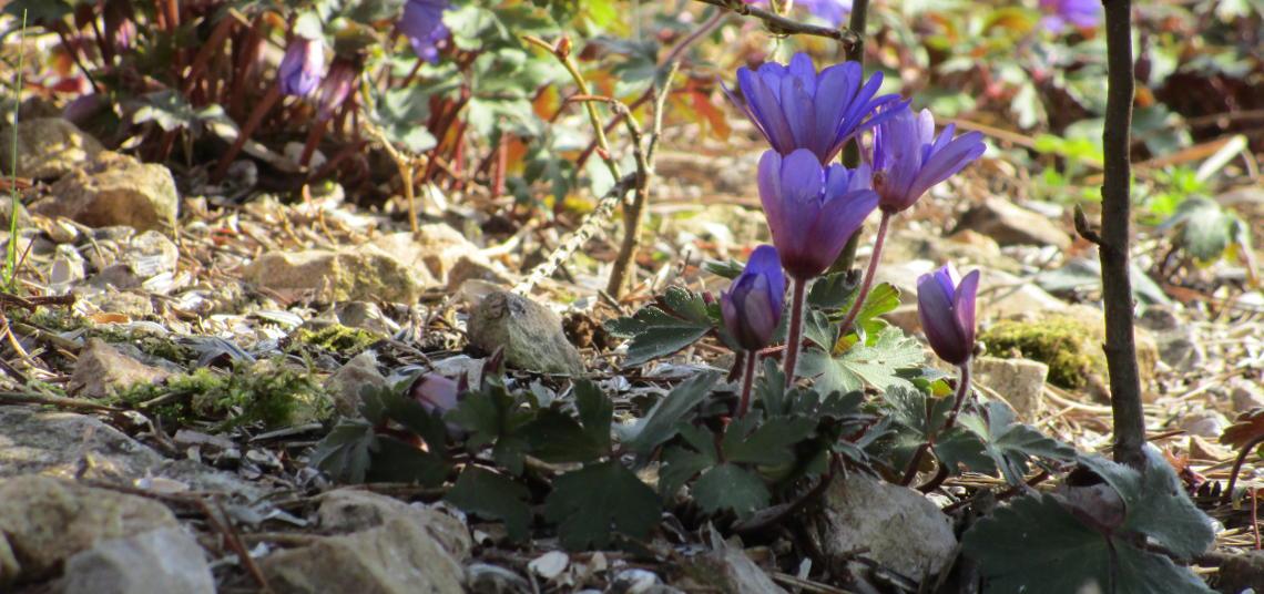 Kleine Blüten versteckt im Schatten