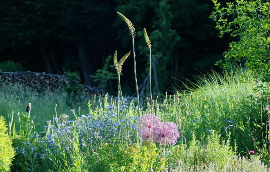 Individuelle Gartenpflege Ingolstadt. Bildausschnitt eines gepflegten Sommerbeetes